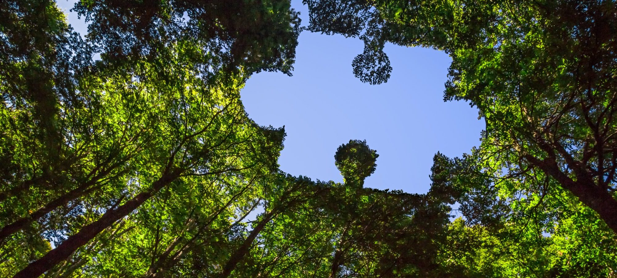 The trees in the sky with a giant outline of a puzzle shape gap in the middle reveals the sunny blue sky.